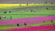 03292021_tulip_075714-780x445.jpg