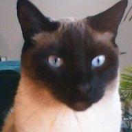 Spinachcat